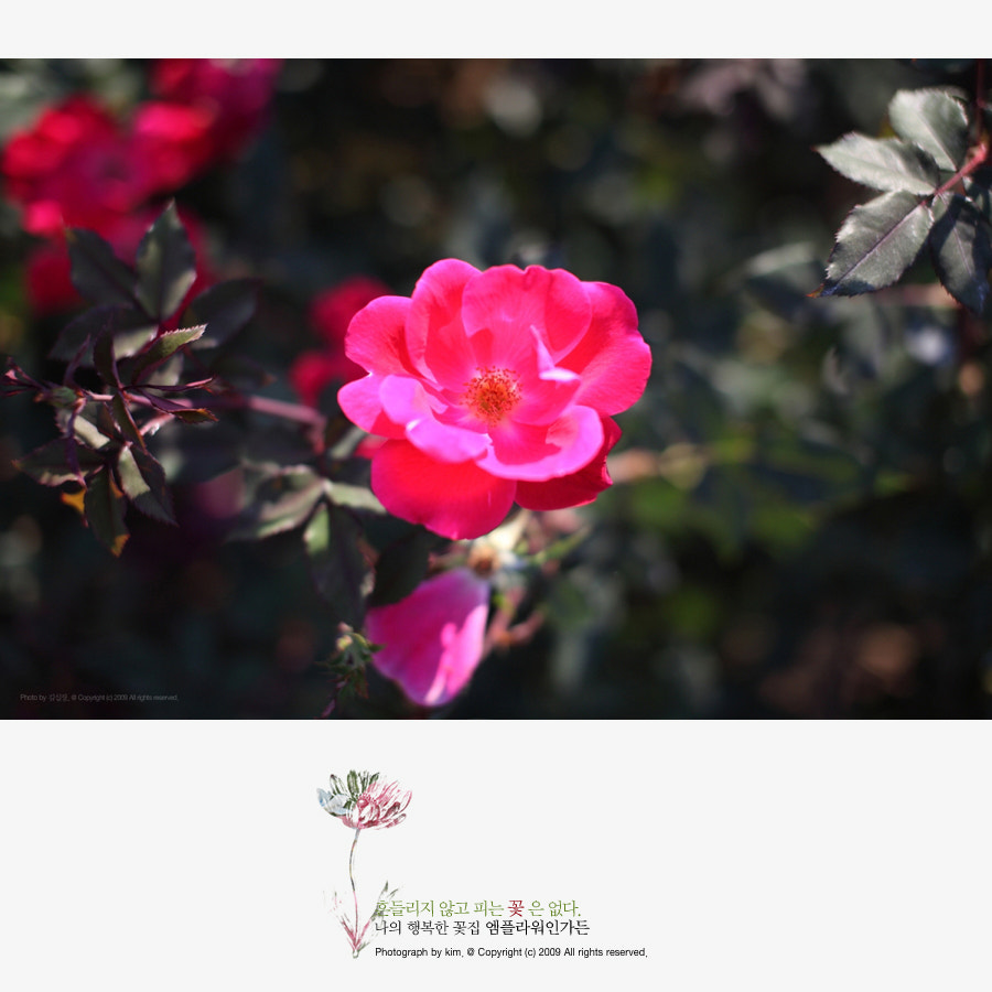 Photograph rose by KIM DONGYOUNG on 500px