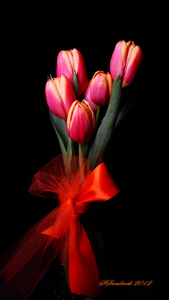 Photograph Tulips by Silvia Sandrock on 500px