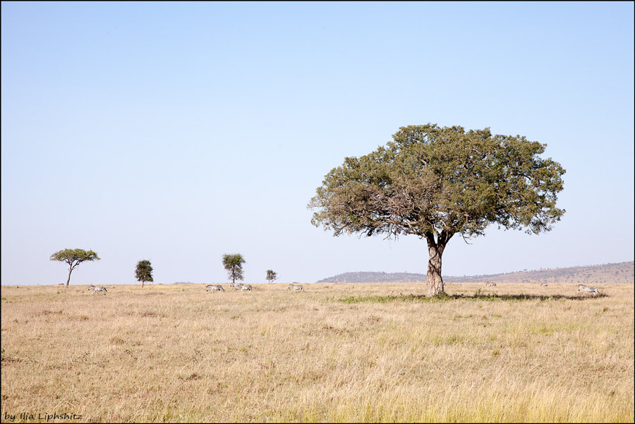 Landscapes of Serengeti №2