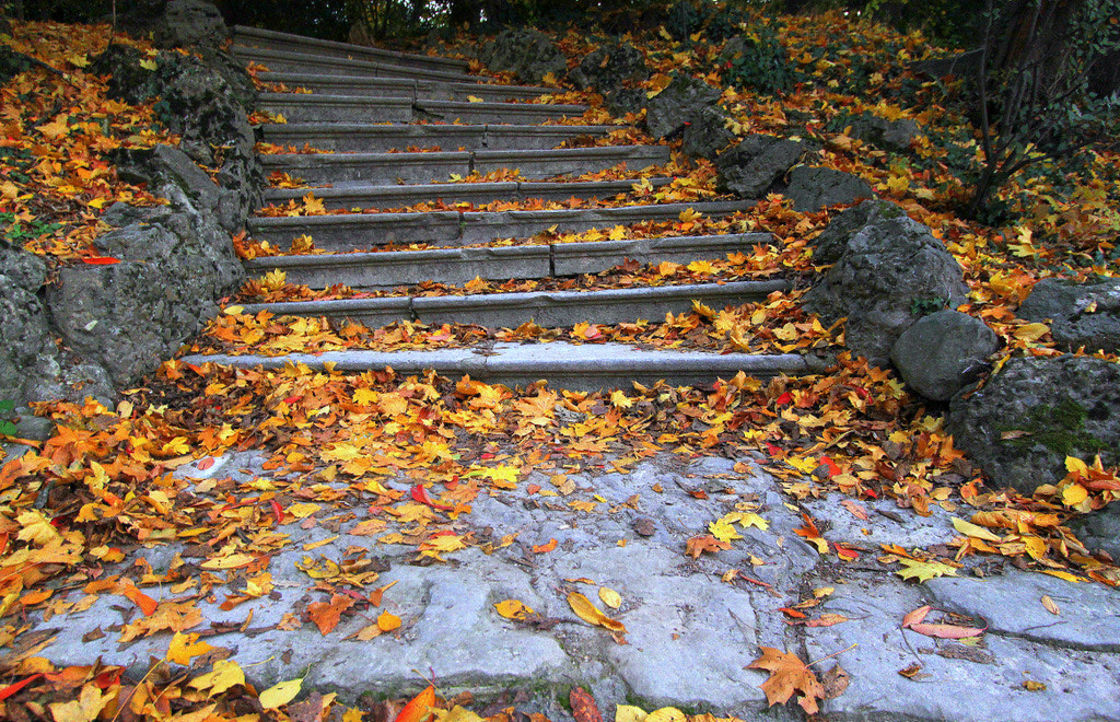 Photograph Broken stairs and autumn leaves by Rainer Leiss on 500px