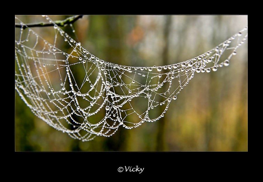 Photograph spiderweb in autumn by Vicky Dens on 500px