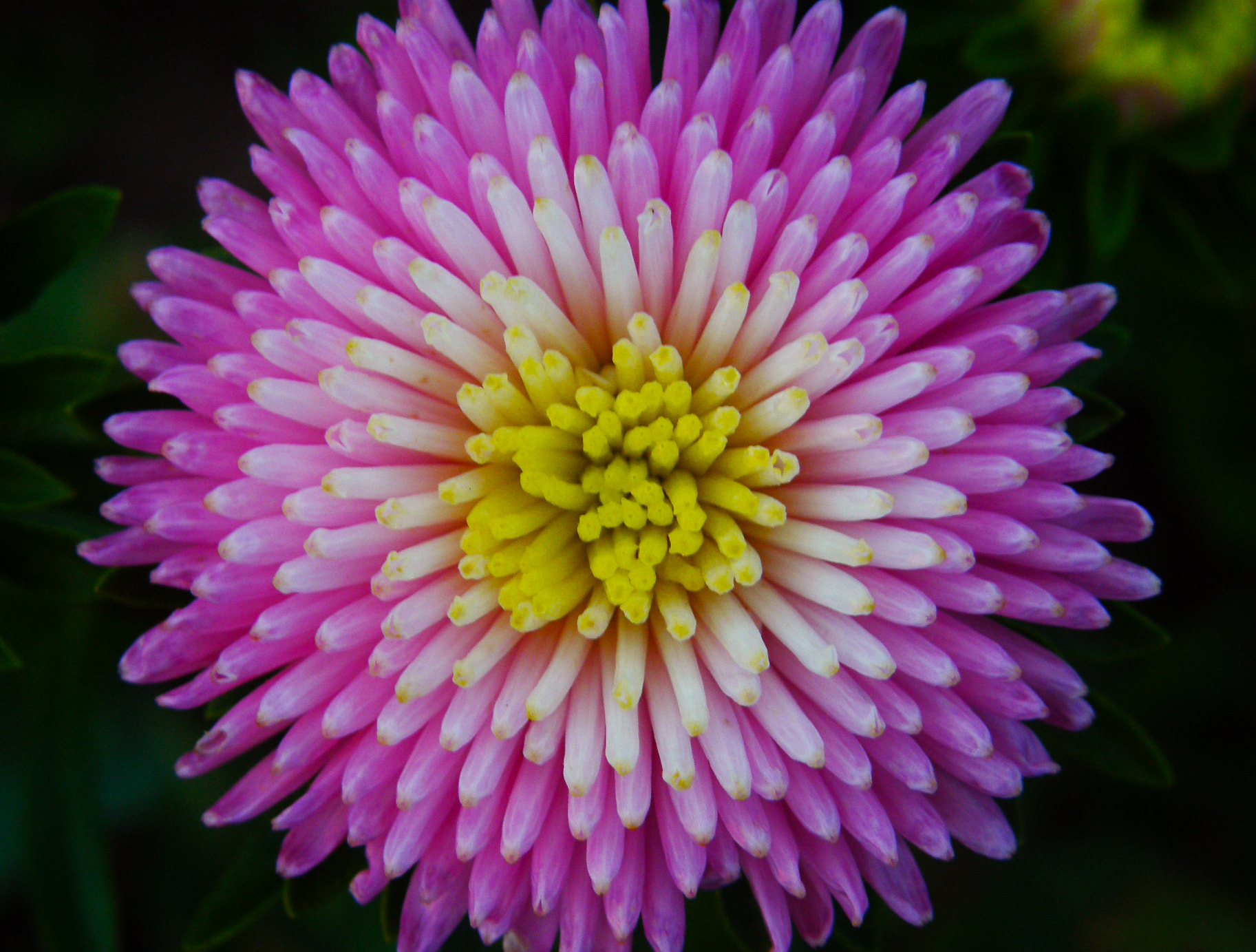 Photograph The flower by Iva Mihalic on 500px