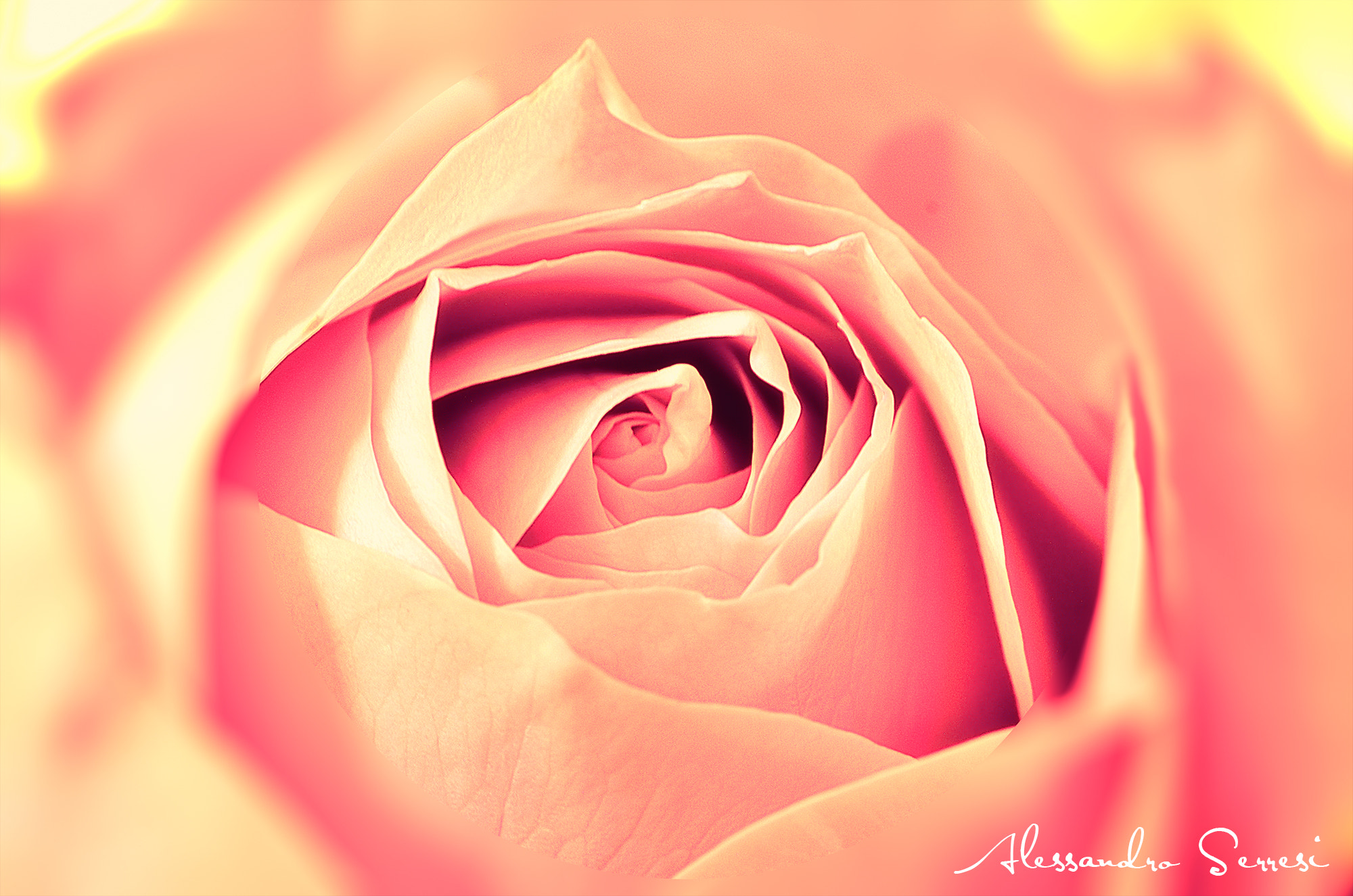 Photograph ROSA by Alessandro Serresi on 500px