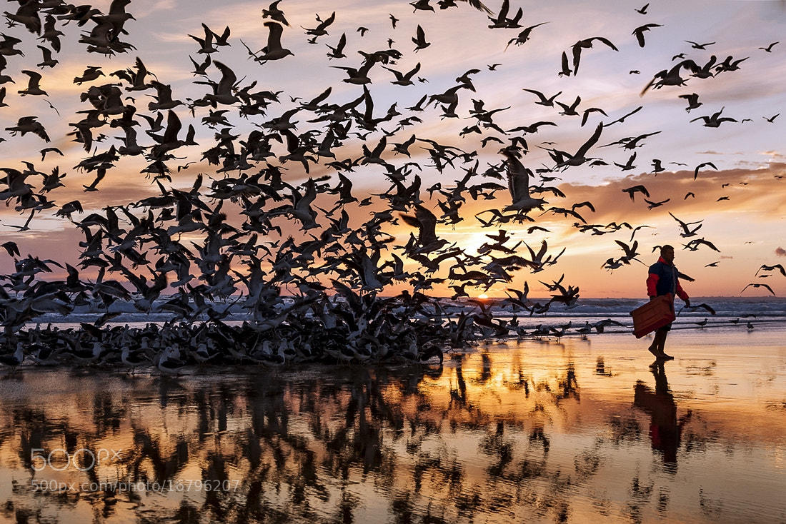 Photograph gulls attack by António Leão on 500px