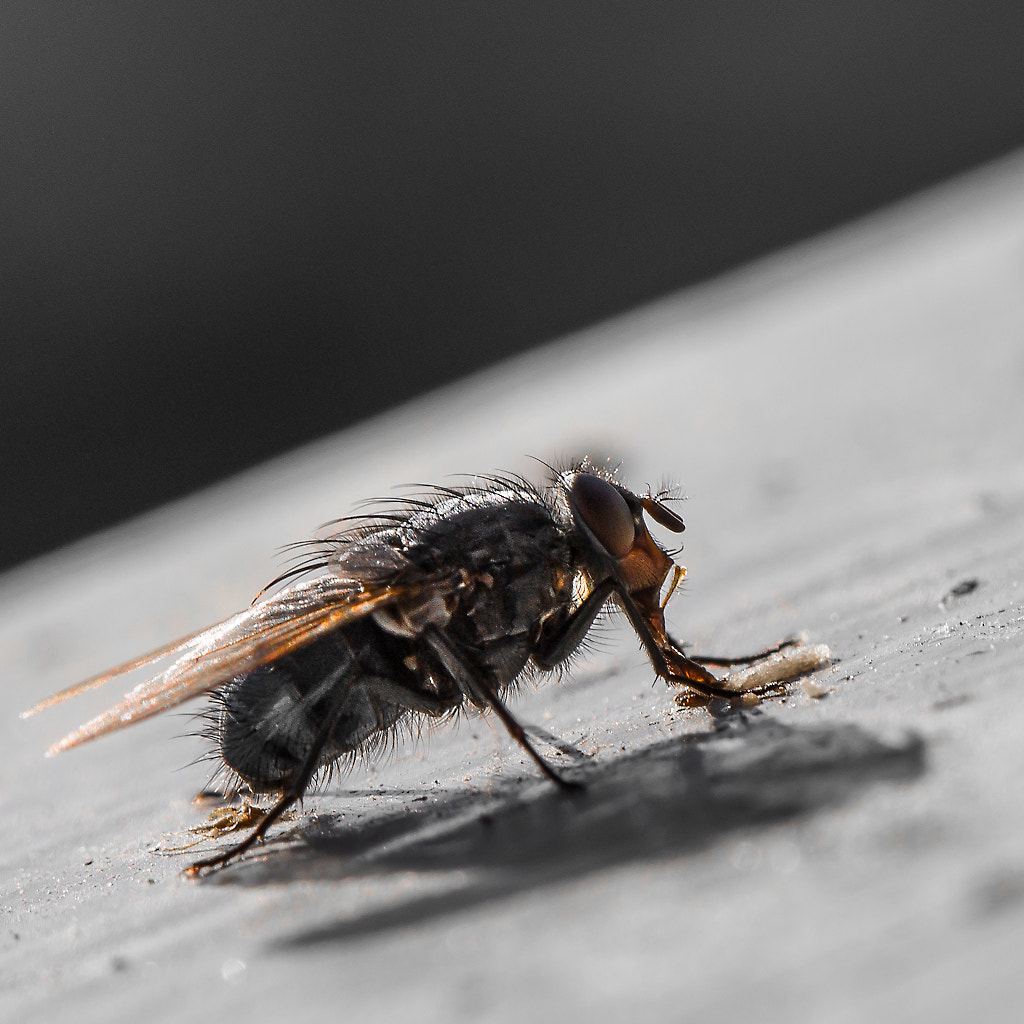 Photograph The Fly by Ove Bjerknes on 500px