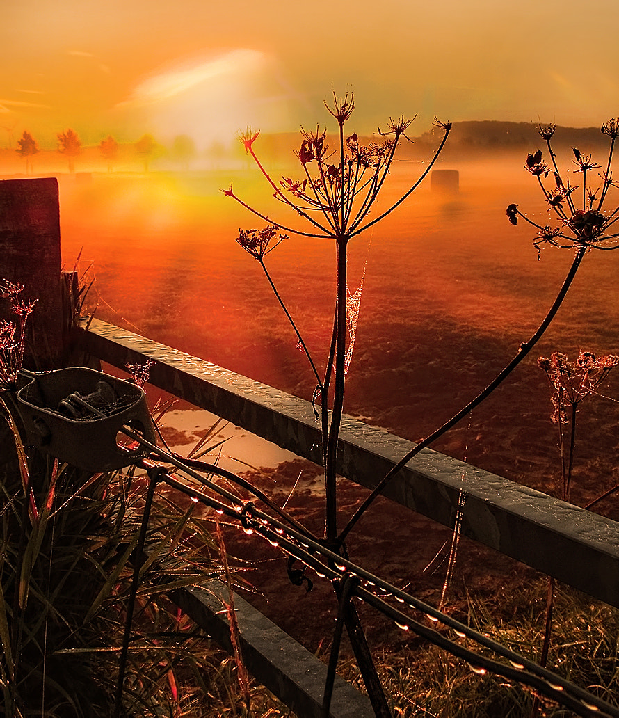 Photograph morning glory in Culemborg by Patrick Strik on 500px