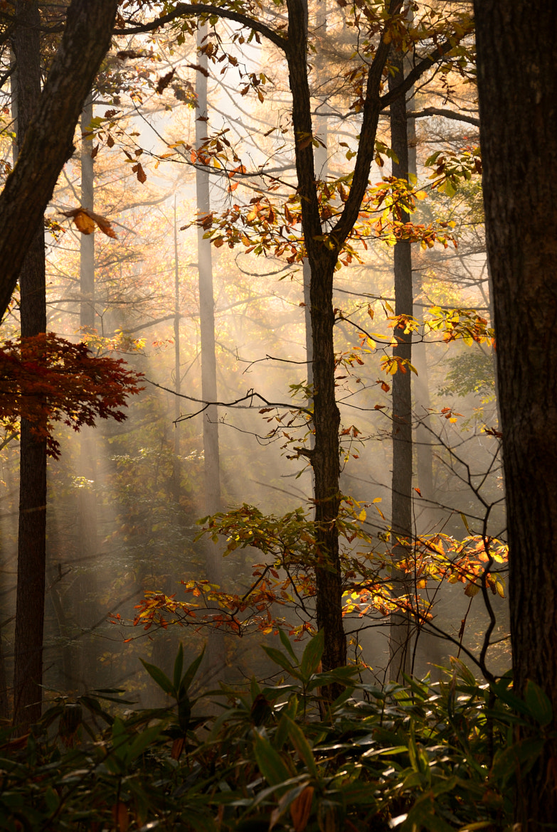 Photograph A autumn (№37)-in a forest by kazumi Ishikawa on 500px
