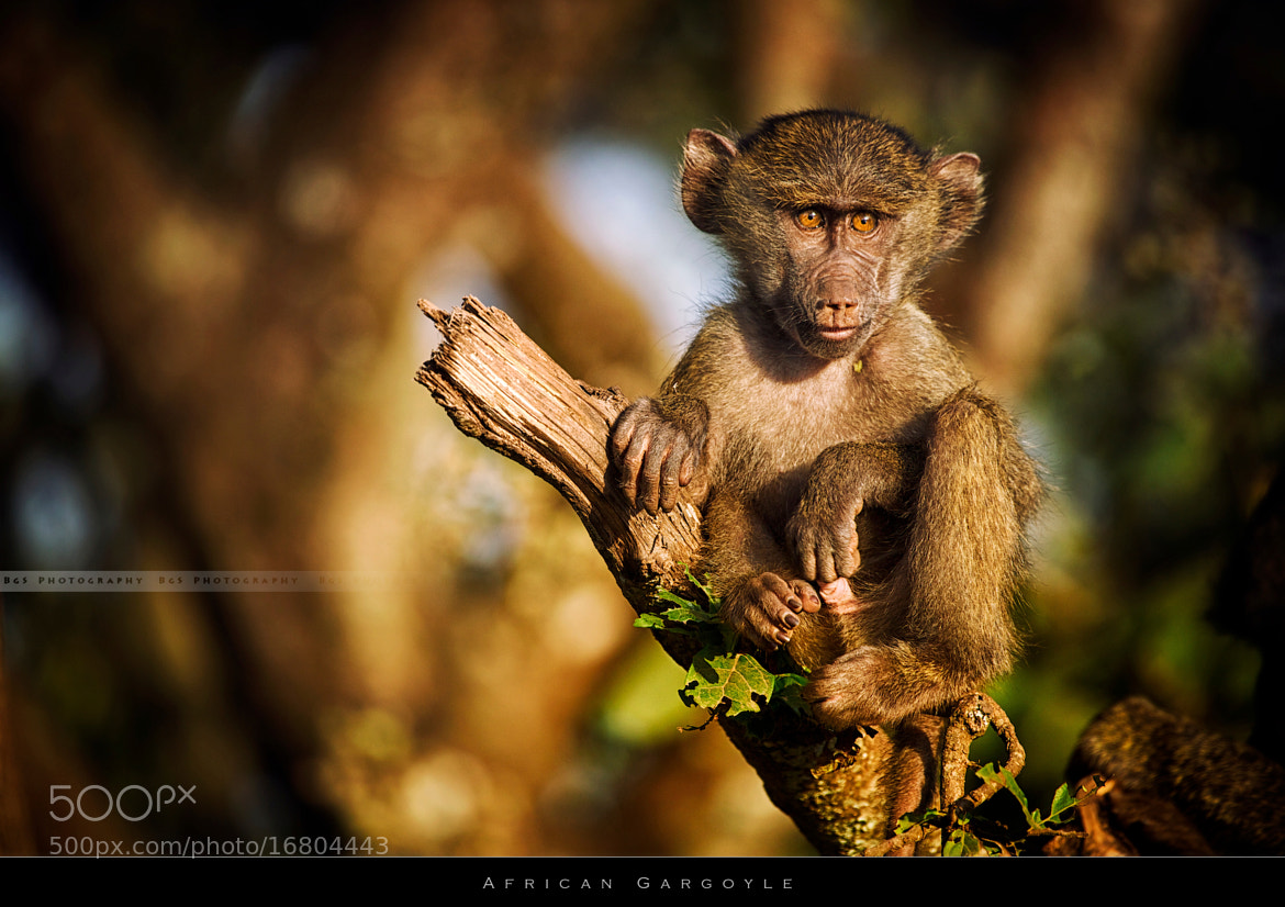 Photograph African Gargoyle by Benjamin gs on 500px
