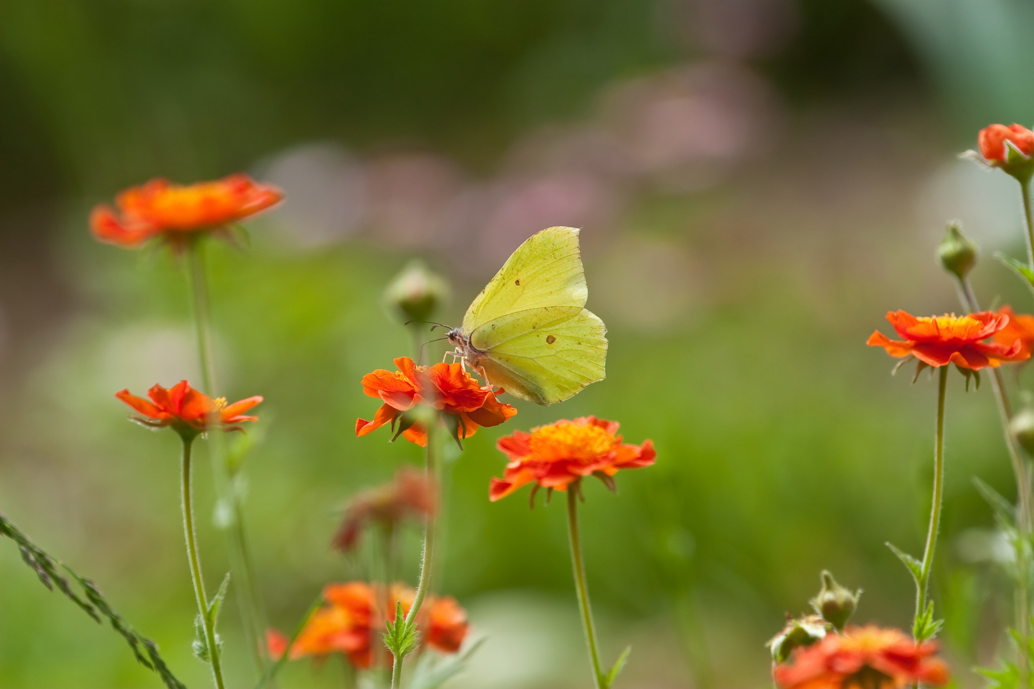 Photograph Yellow butterfly by Andrey Philippov on 500px