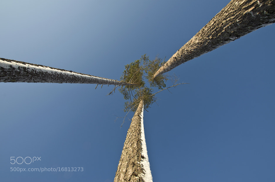 Photograph Looking Up by Sten Wiklund on 500px