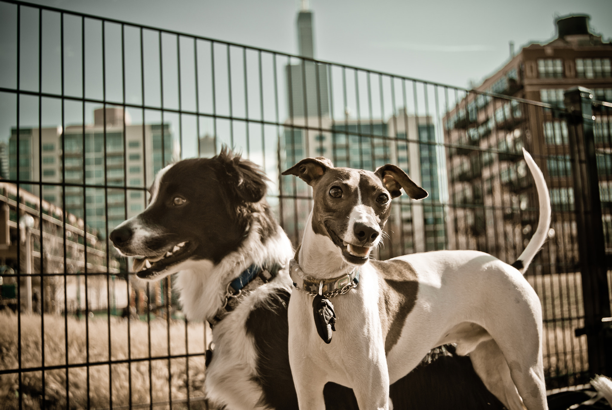 Photograph Jackson and Vito by HylerC Photography on 500px
