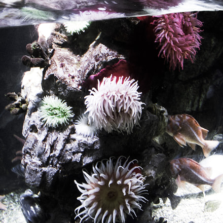 Aquarium sea urchins stylized, Nikon COOLPIX S50