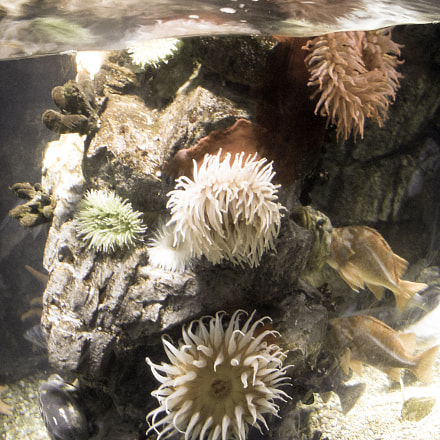Sea Urchins Lit up, Nikon COOLPIX S50