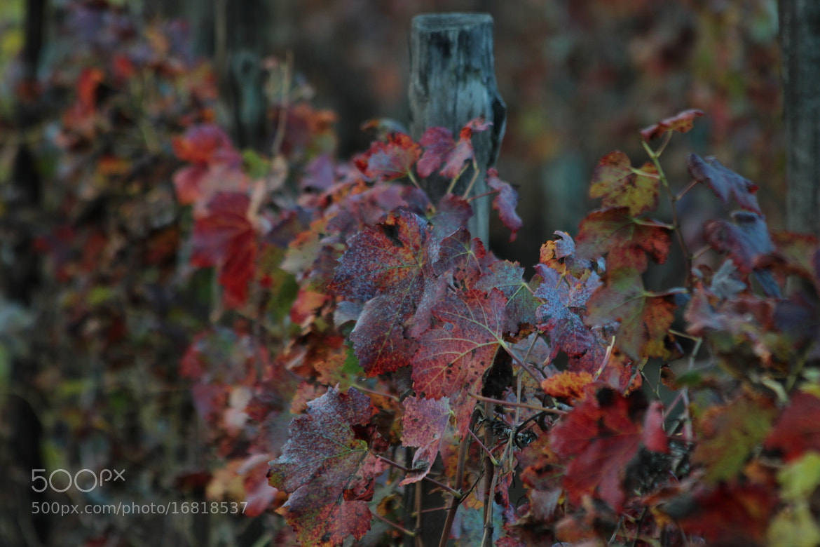 Photograph red autumn by Paola Fiore on 500px