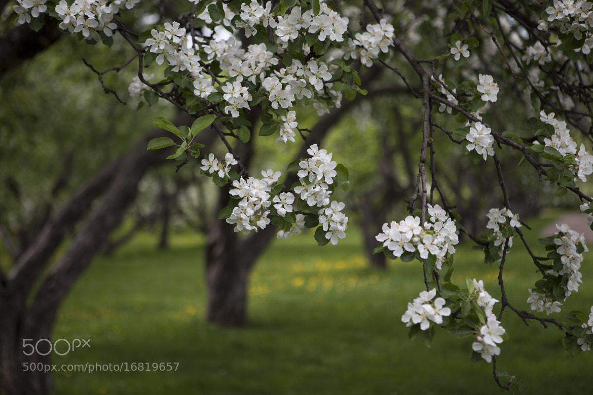 Photograph Untitled by Olesia Mishkina on 500px