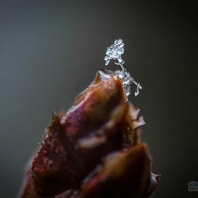 Schneeflocke | Snowflake