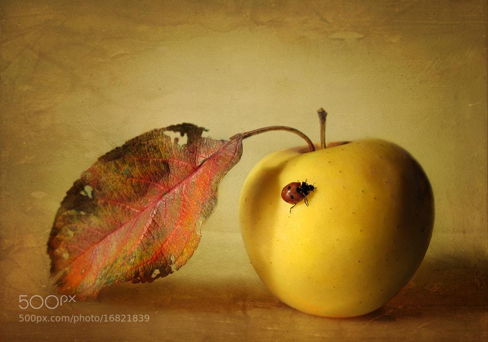 Photograph Lady talks about autumn by Halasz Szabo Haynal on 500px