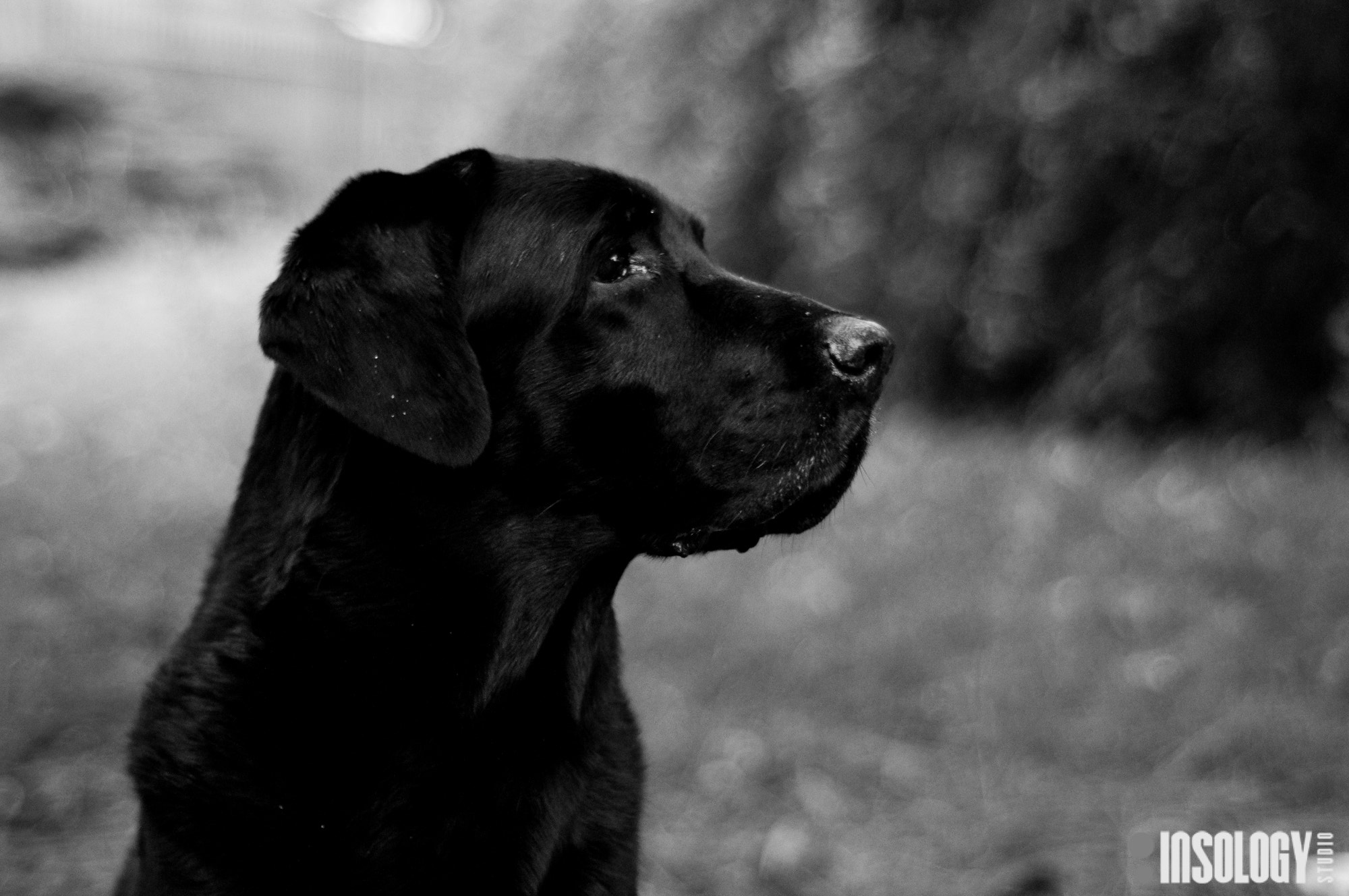 Photograph My Dog! by Mattia Marchiorato on 500px