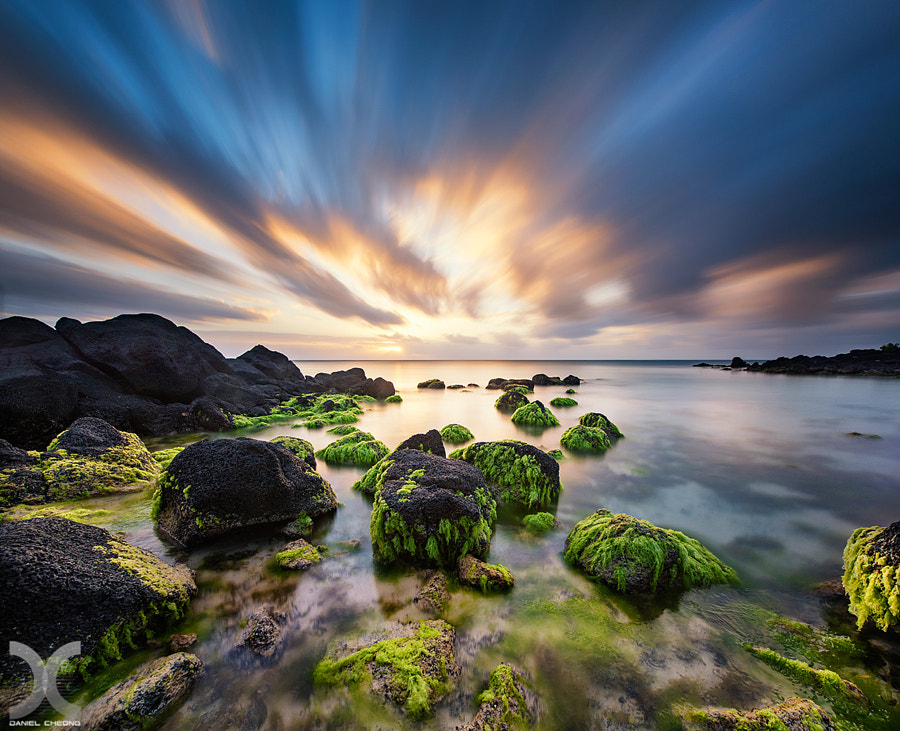 Seaweed Garden by Daniel Cheong on 500px.com