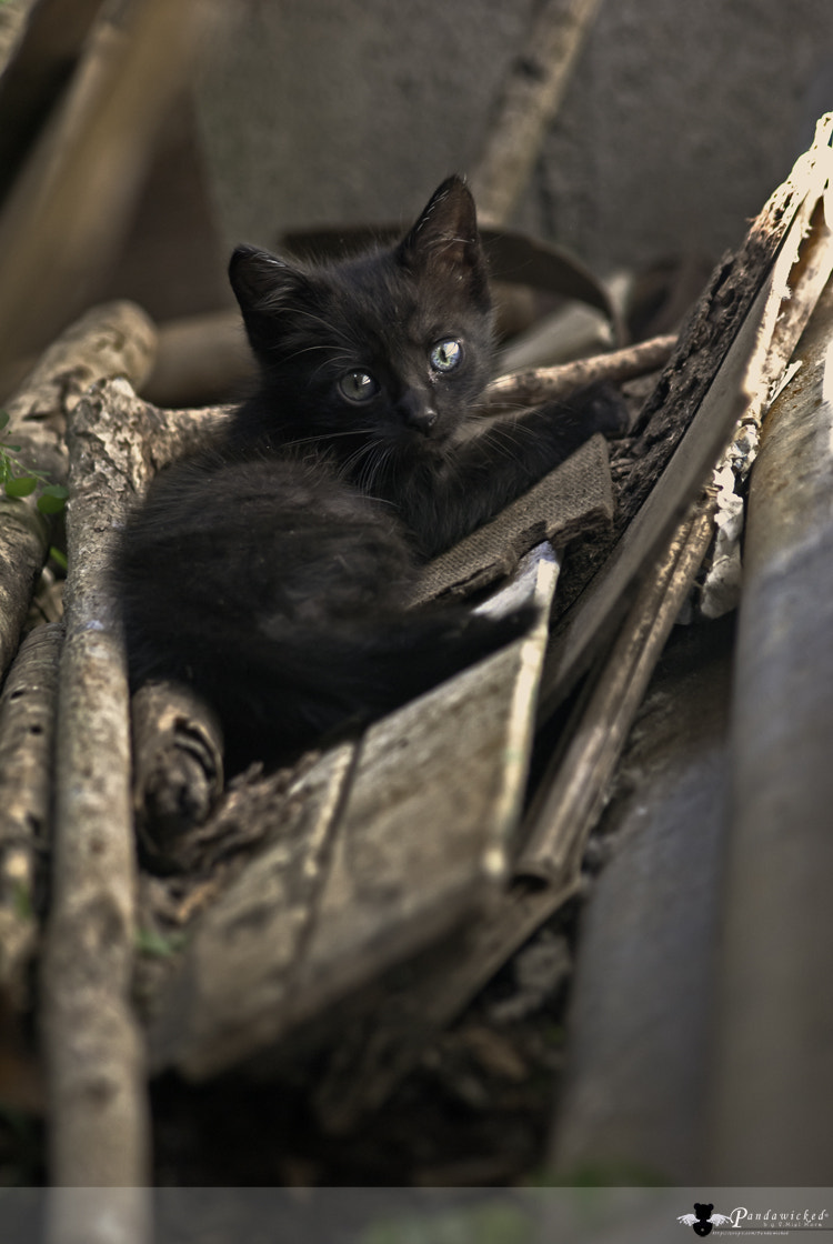 Photograph Cats Diary: Kanmme  by PandaWicked  on 500px
