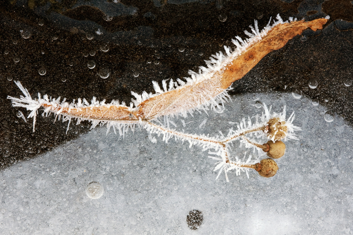 Photograph Ice in nature by Ödön Czintos on 500px