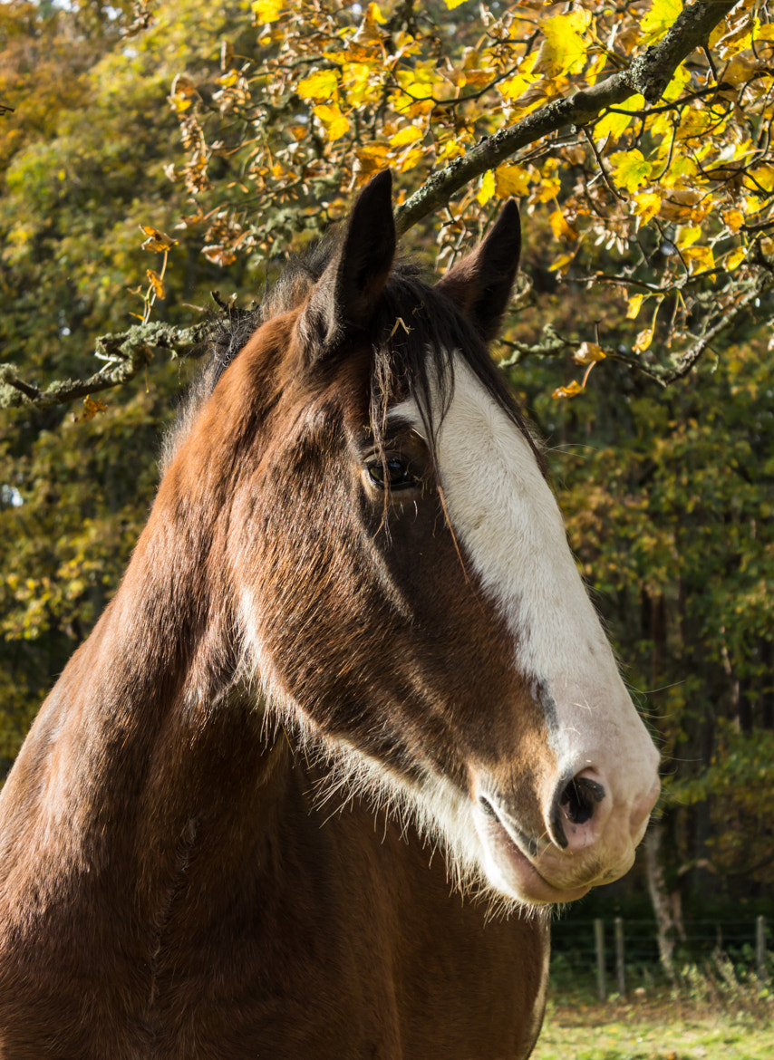 Photograph Horse by Adam Z on 500px