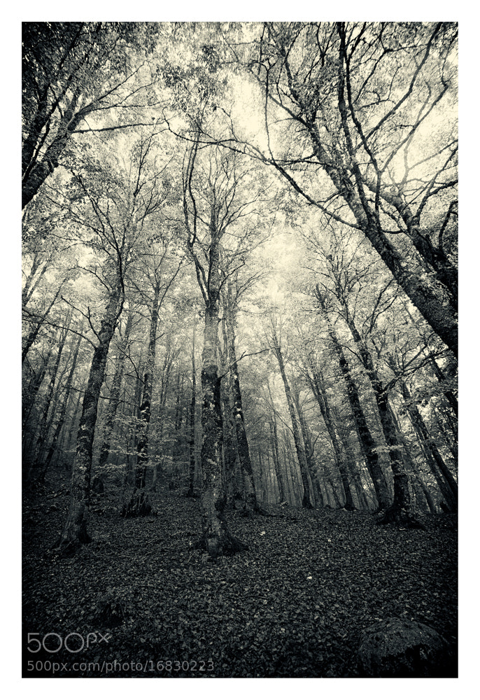 Photograph The witches wood by Paolo Costantino on 500px