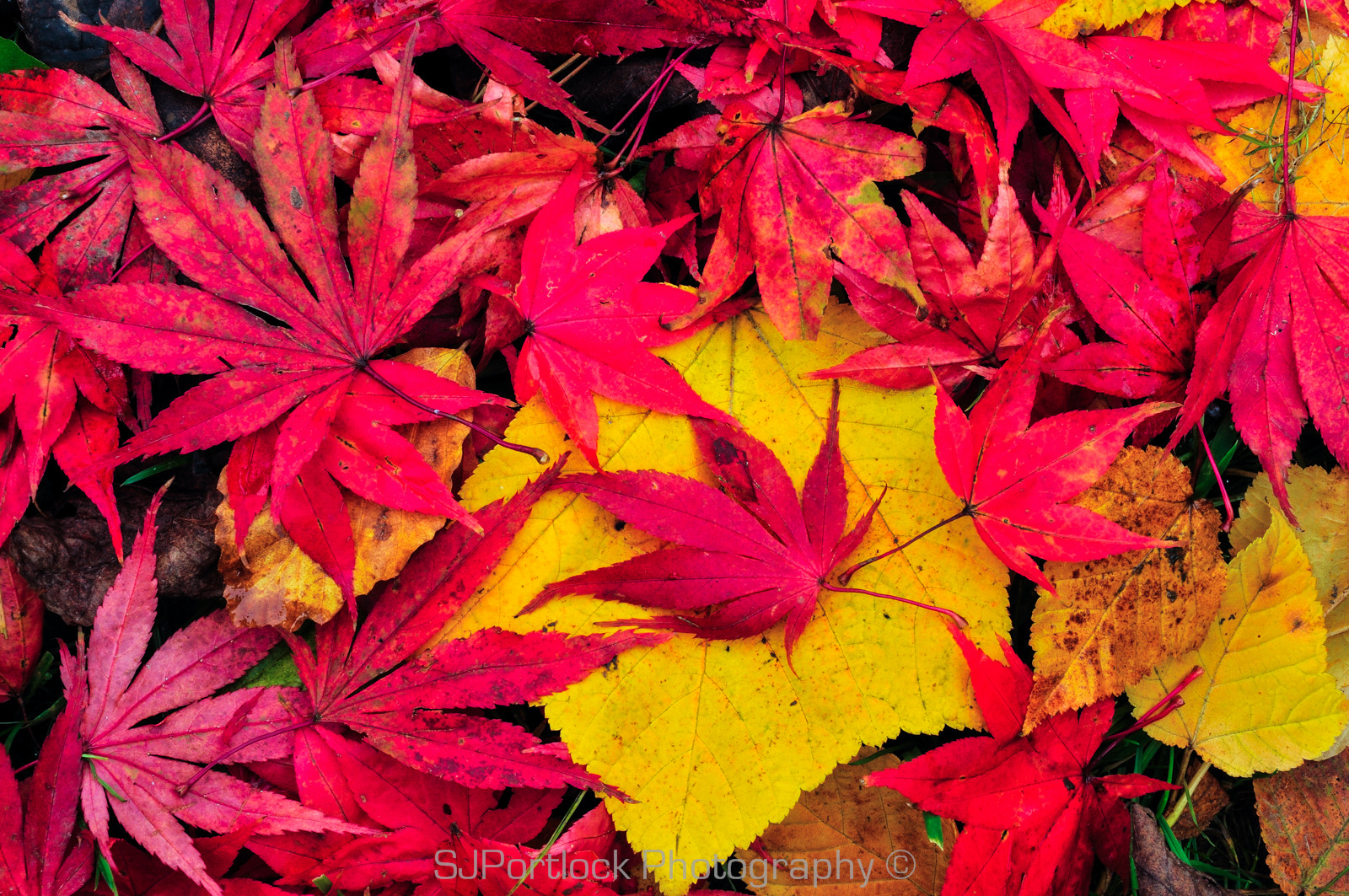 Photograph Colours of Autumn by Stephen Portlock on 500px