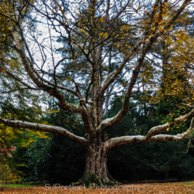 The Godfather of Westonbirt by Stephen Portlock (SJPortlock)) on 500px.com
