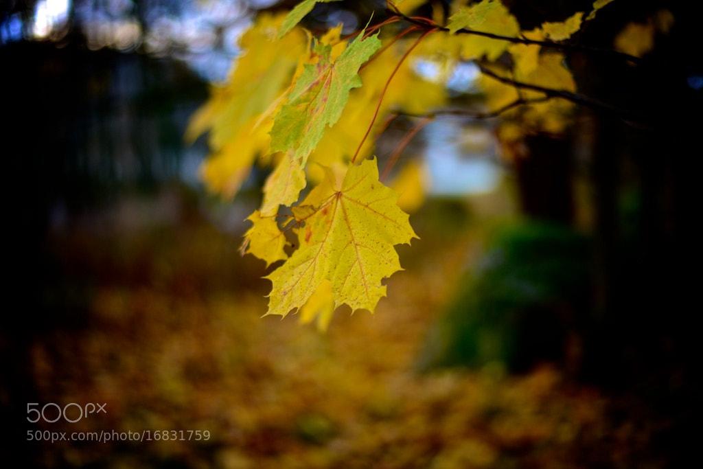 Photograph Autumn by Johan Dahlman on 500px