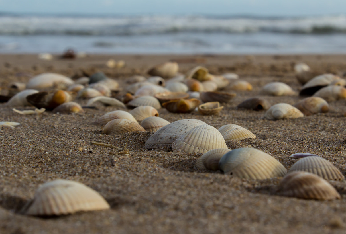 Photograph Shells by Adam Z on 500px