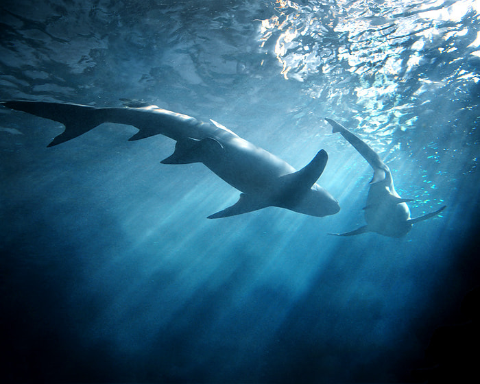 Photograph The Shark Couple  by Jet Uarpanyaporn on 500px