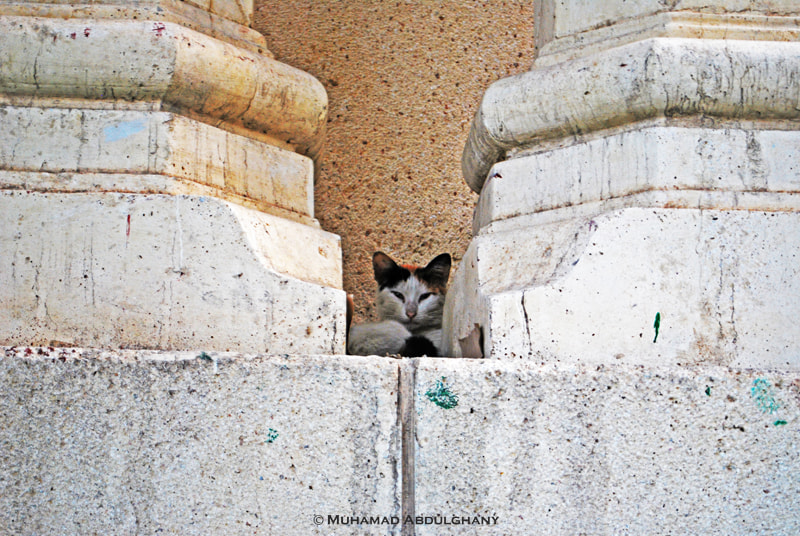 Photograph Cat Effect by Muhamad Abdulghany on 500px