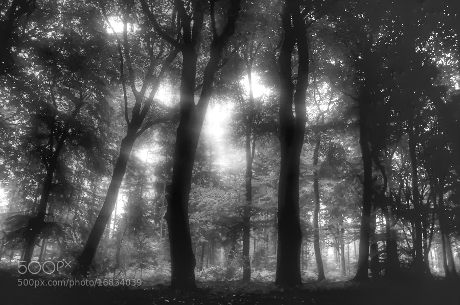 Photograph Dutch Forest by B Timmer on 500px