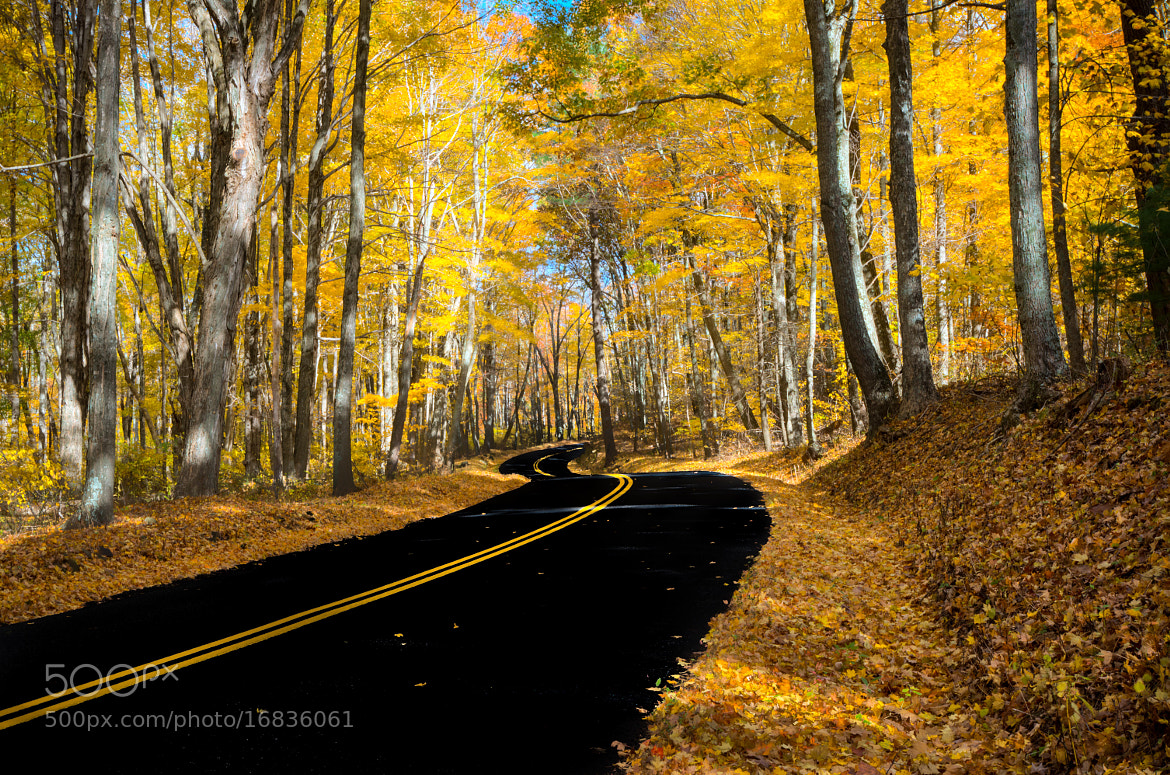 Photograph Fall Road by Brandon Dewey on 500px