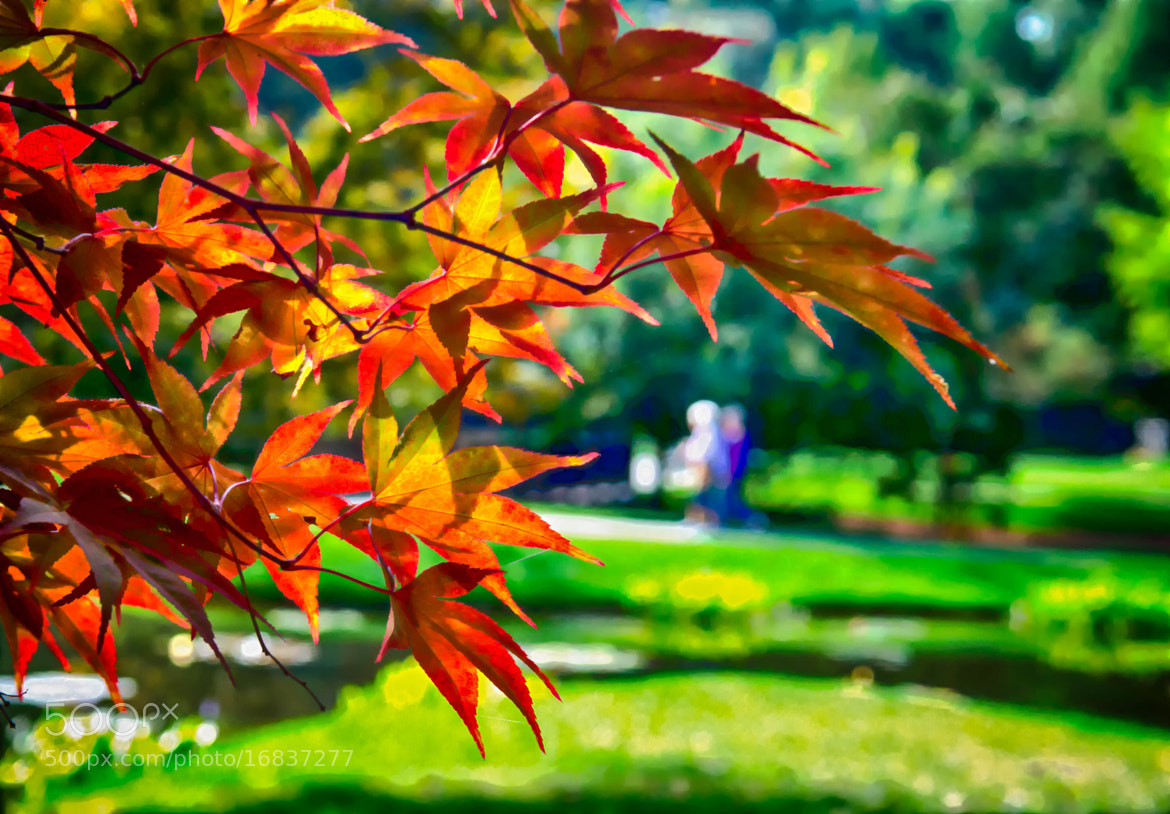 Photograph Colorful Leaves by Ronald Roberts on 500px