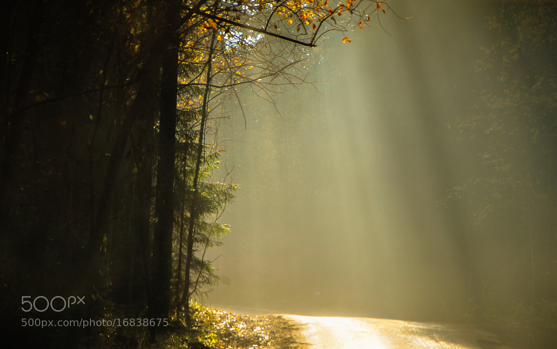 Photograph autumn rays by Lissa Strel on 500px