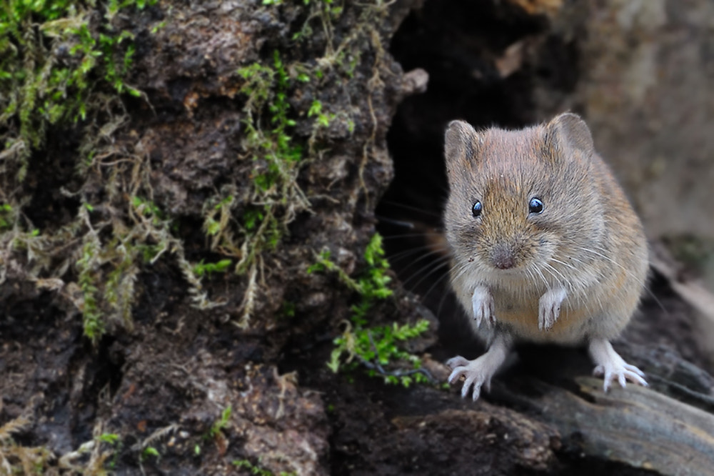 Photograph wood mouse by Wolfgang von Vietinghoff on 500px