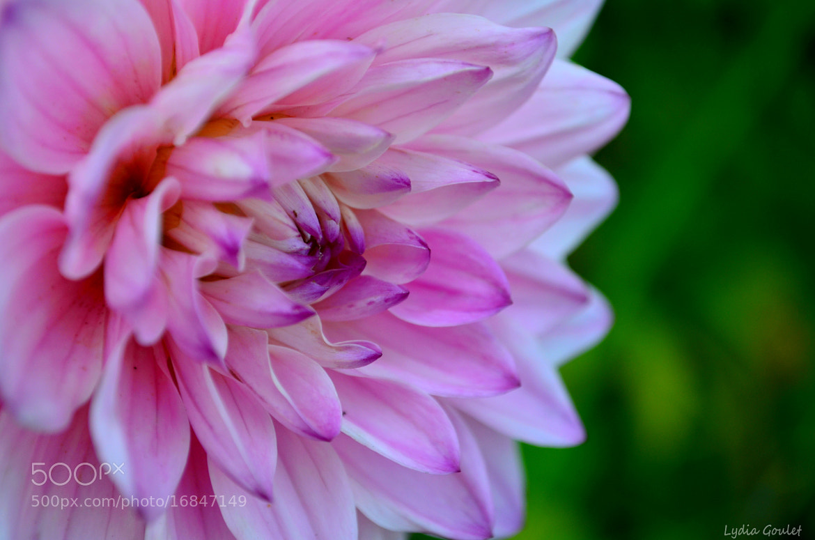Photograph Flower by Lydia Goulet on 500px