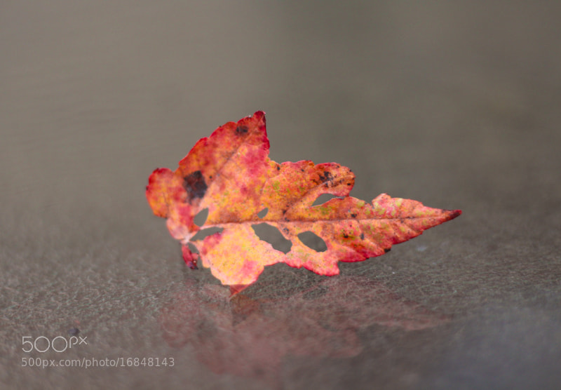 Photograph Damaged, but lively colors! by Surya Suravarapu on 500px