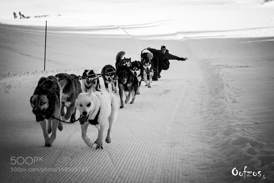 Mushing in Jura !