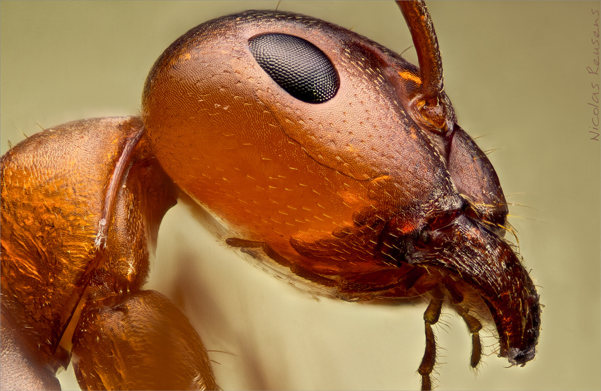 Photograph The ANT by Nicolas Reusens on 500px