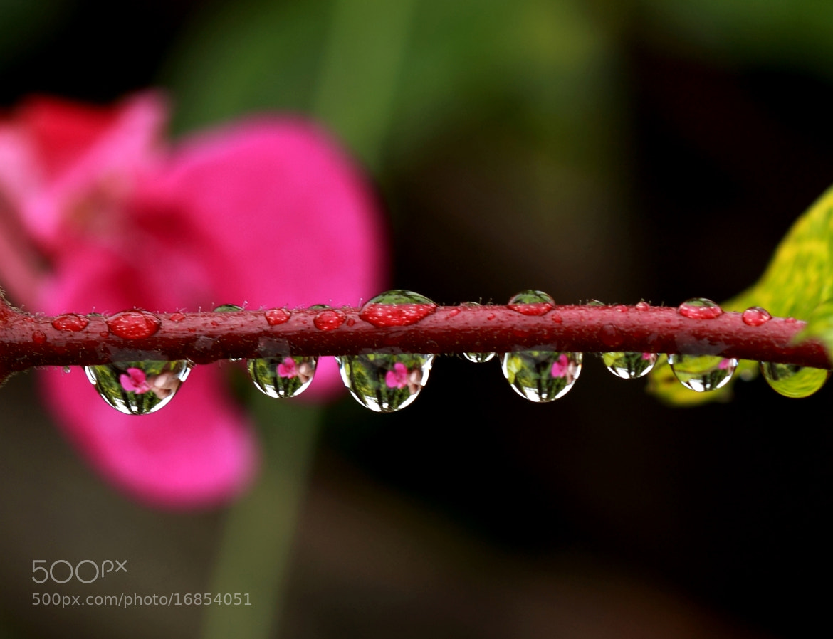 Photograph Drops.... by Manoj Kumar Barman on 500px