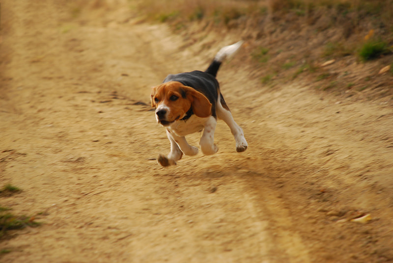 Photograph flying dog by Ioan  Bodean on 500px