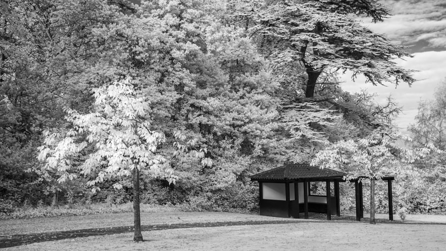Lauriston Castle tree