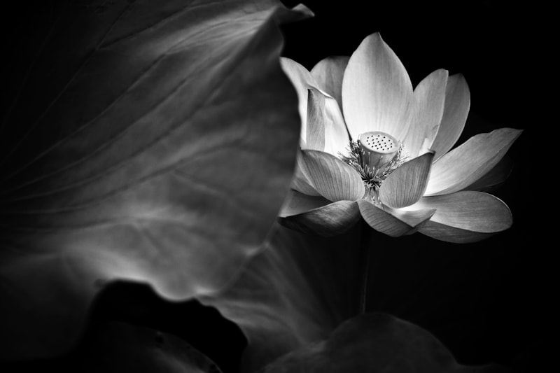 Photograph Untitled by Kevin Gu on 500px