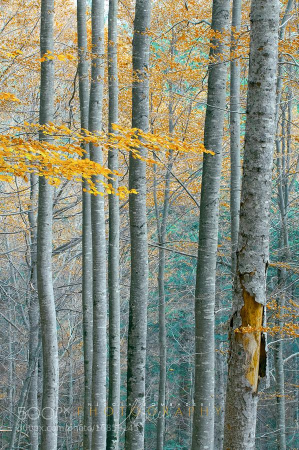 Photograph  line upwards by Nicola Bombassei on 500px