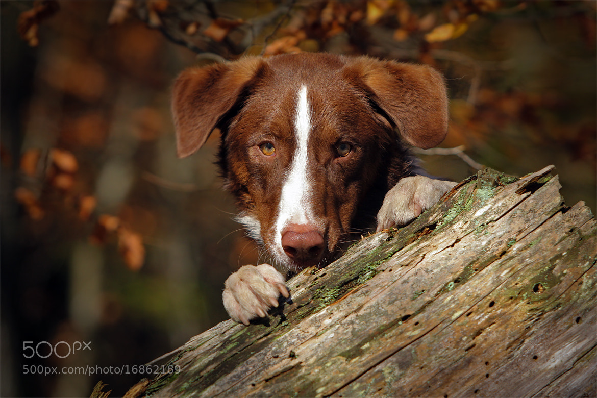 Photograph Bandit ... by Mathias Ahrens on 500px