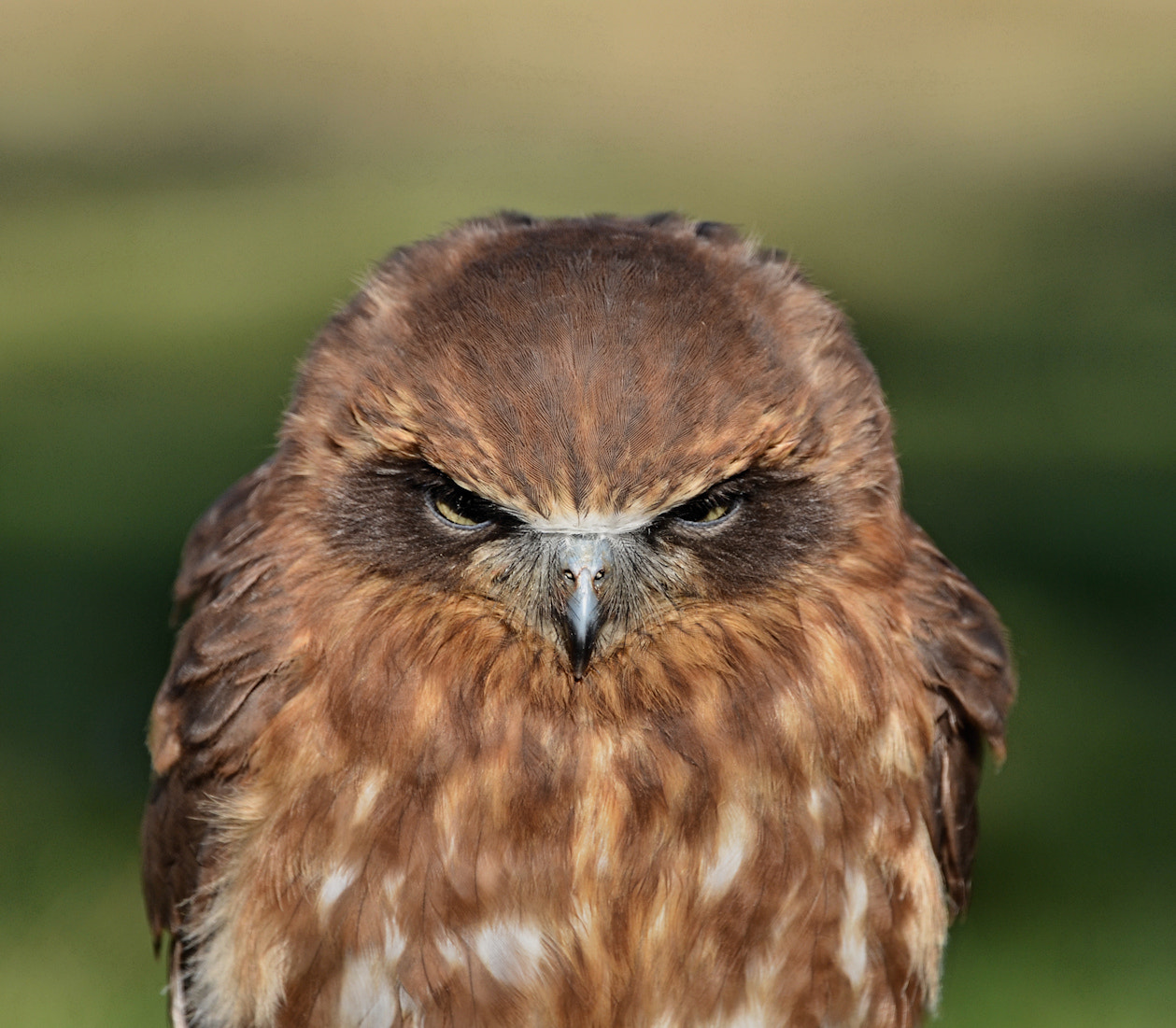 Photograph Angry bird. by Frank de Ridder on 500px