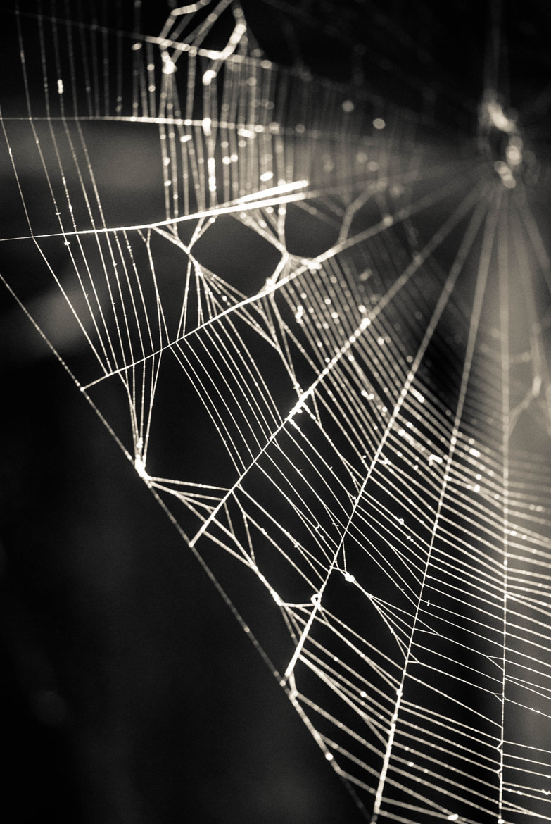 Photograph Light on web by Viktor Chan on 500px